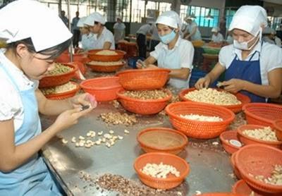 Việt Nam xuất khẩu hạt điều đứng đầu thế giới 8 năm liên tiếp